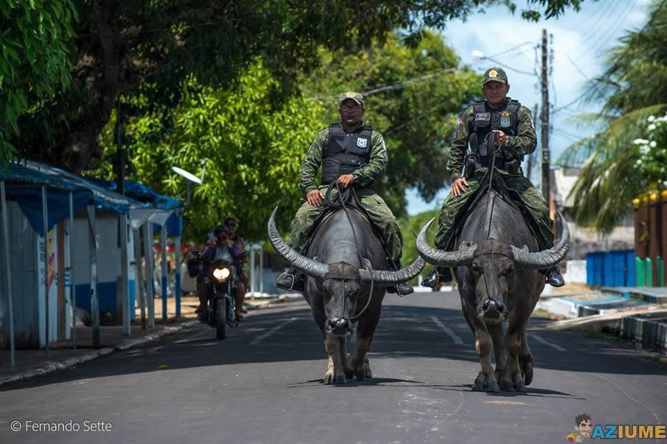 Polícia militar usando búfalos para patrulhar