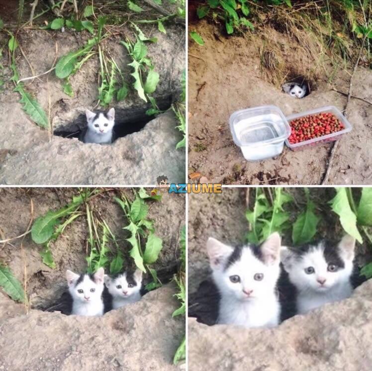 Alimentando gato de rua