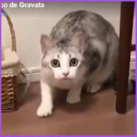Gato conversando com o humano